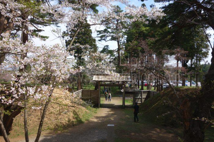 松前藩戸切地陣屋跡 桜トンネル